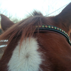 Blingy Browbands- They enhance your life!